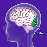 Area of the brain effected by Benign Occipital Epilepsy.