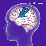 Area of the brain effected by Benign Rolandic Epilepsy