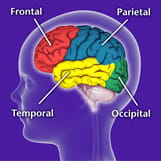 Parts of the Brain Diagram | Children's Pittsburgh