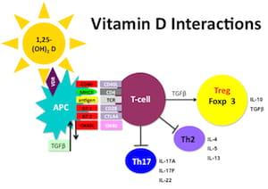 Vitamin D Immune Response to Aspergillus Fumigatus